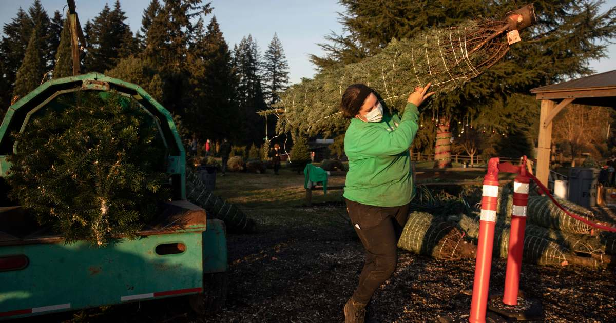 Deck the halls: US families flock to real Christmas trees