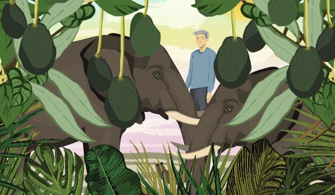Avocados v elephants: Is the green gold putting wildlife at risk?