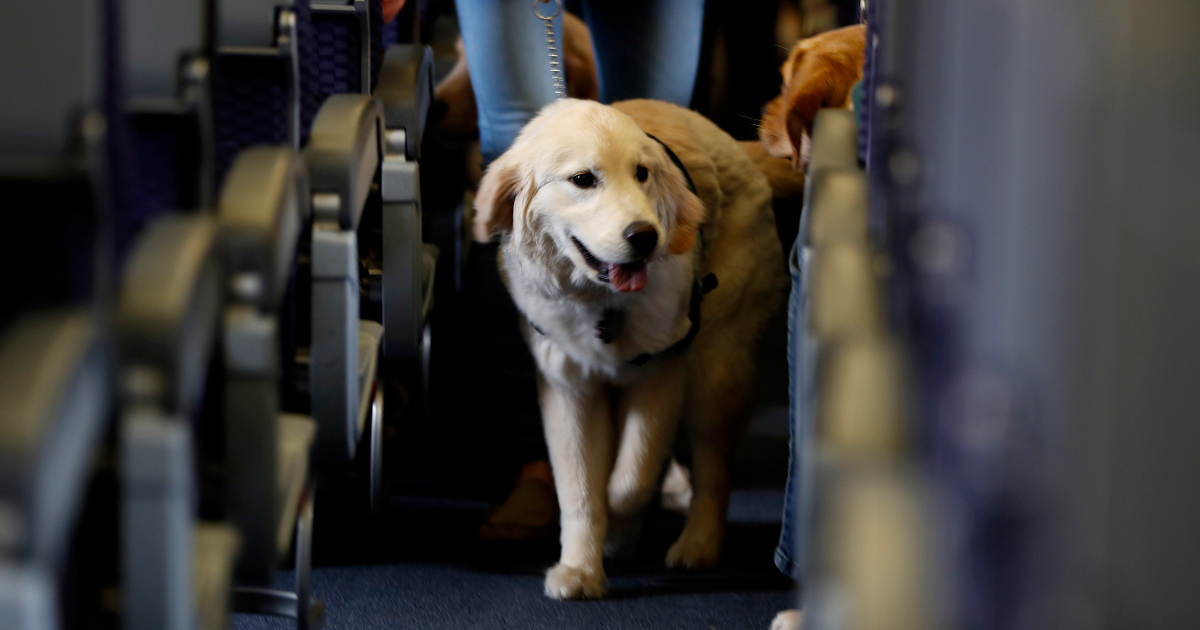 Leave the ferret home: US airlines get tough on in-flight animals