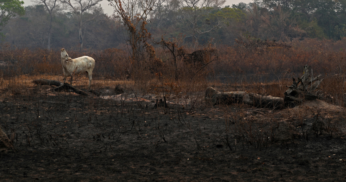 Deforestation razed eight percent of Amazon in 18 years: Study